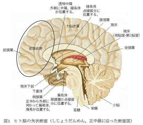 思考能力の低下は脳のネットワーク異常